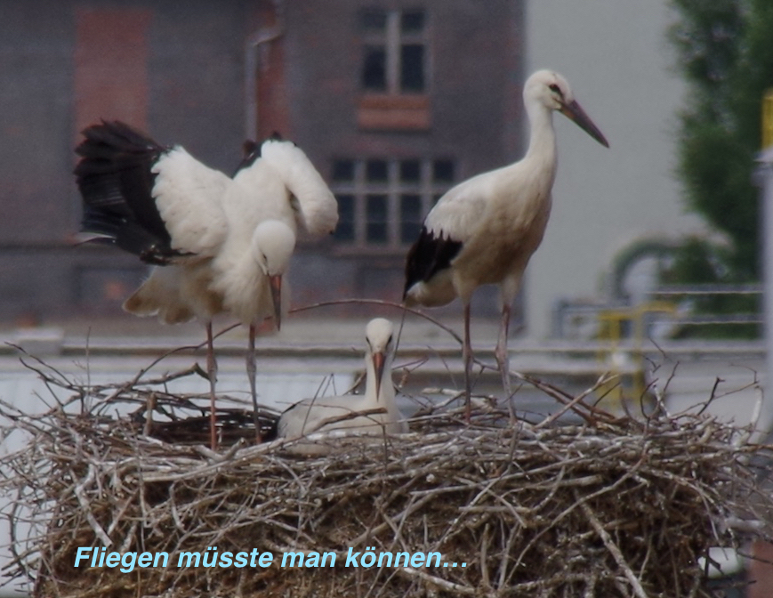 storch2015-50